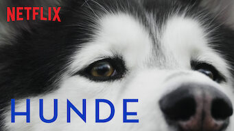Hunde (2018)