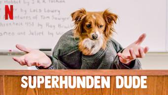 Superhunden Dude (2020)