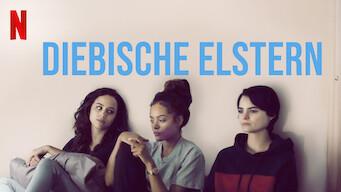 Diebische Elstern (2019)
