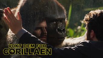 Vokt Dem for gorillaen (2019)
